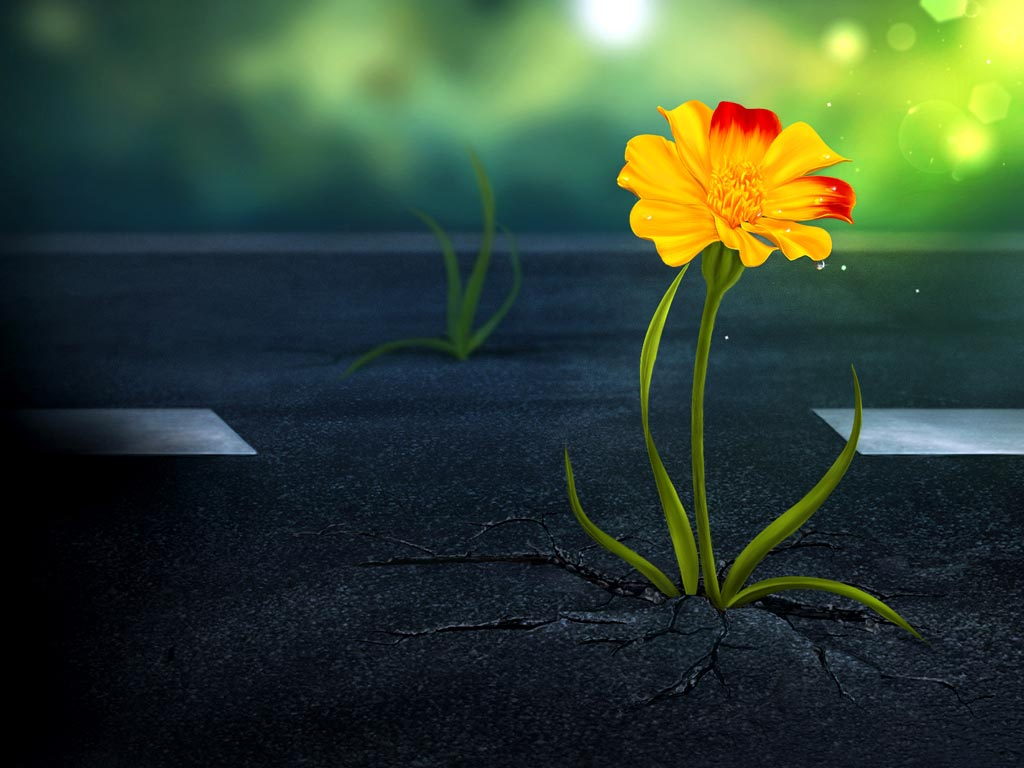 loài hoa mang ý nghĩa cô đơn