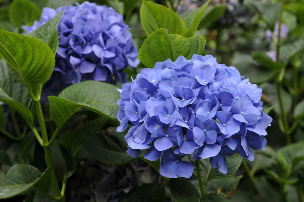 hoa tặng mẹ 5