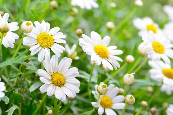 hoa tặng mẹ 7