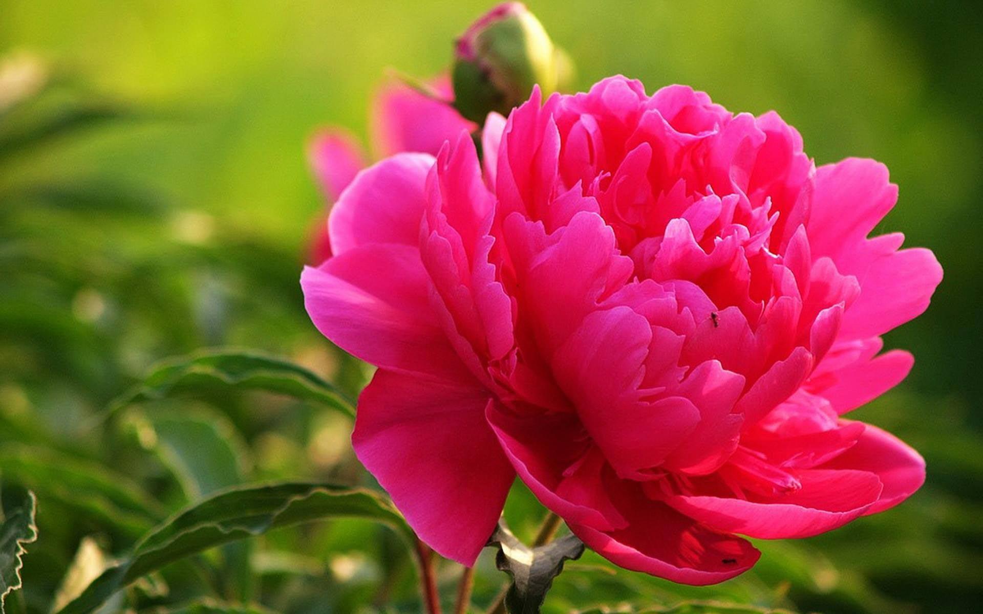 hoa tặng mẹ 8